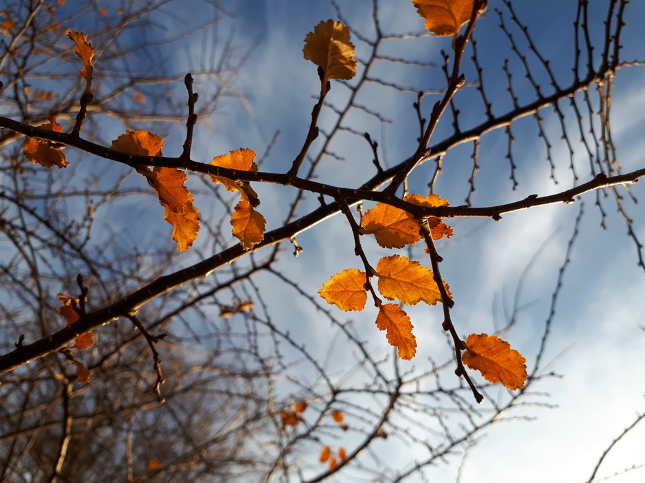 Bijna geen blad meer aan de boom.