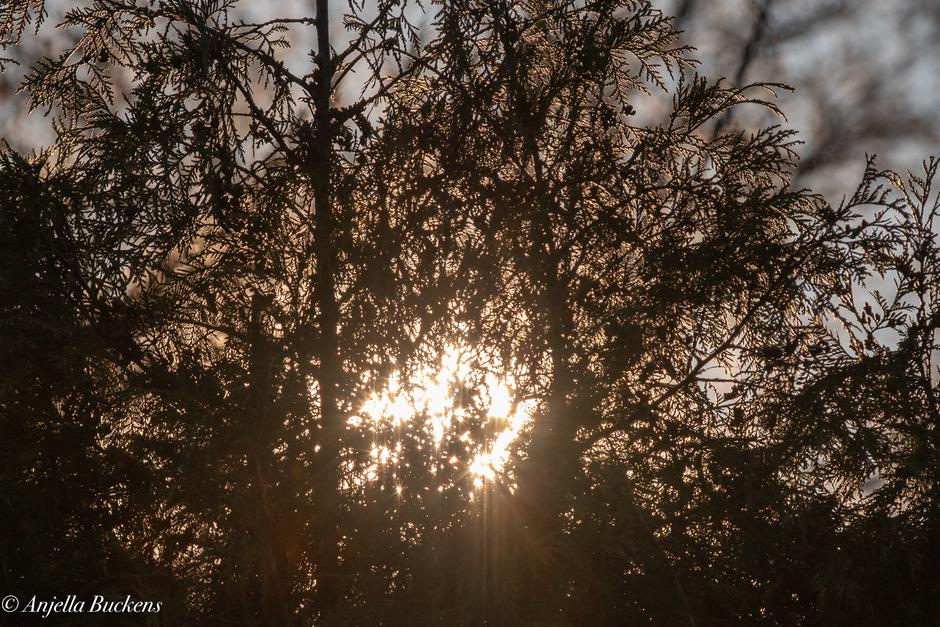 Goud-gele bomen