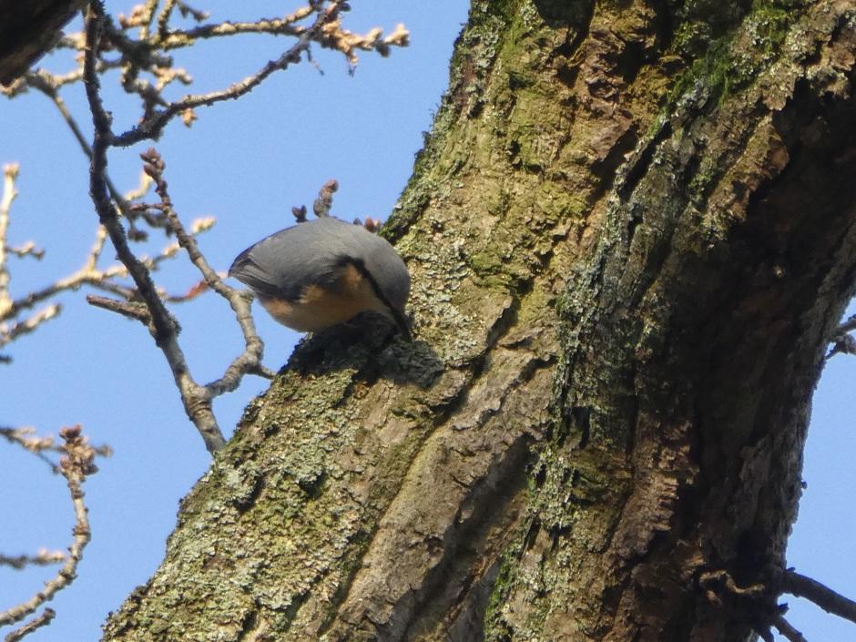 Hoog in een oude eikenboom