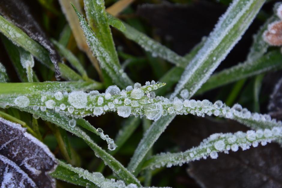 bevroren mistdruppels