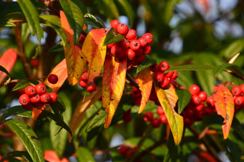 Nog mooie herfstkleuren