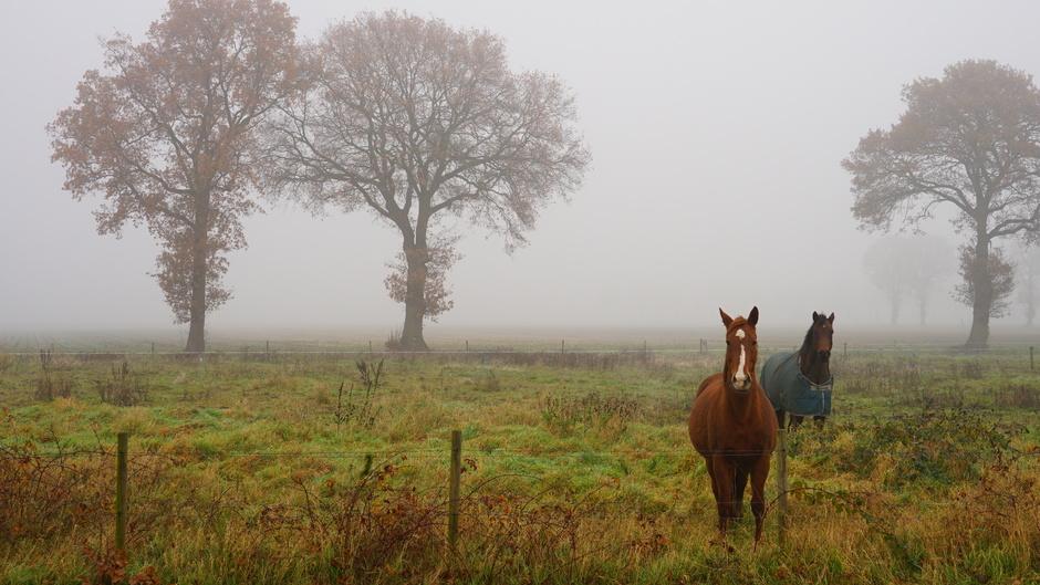 Mist blijft lang hangen