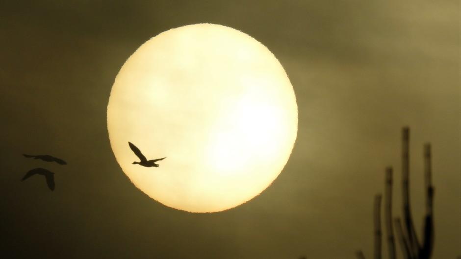 Een mistig zonnetje