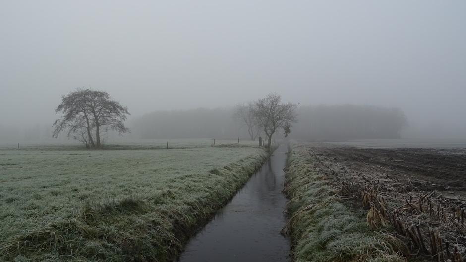 Koud, mistig en grijs weer vandaag