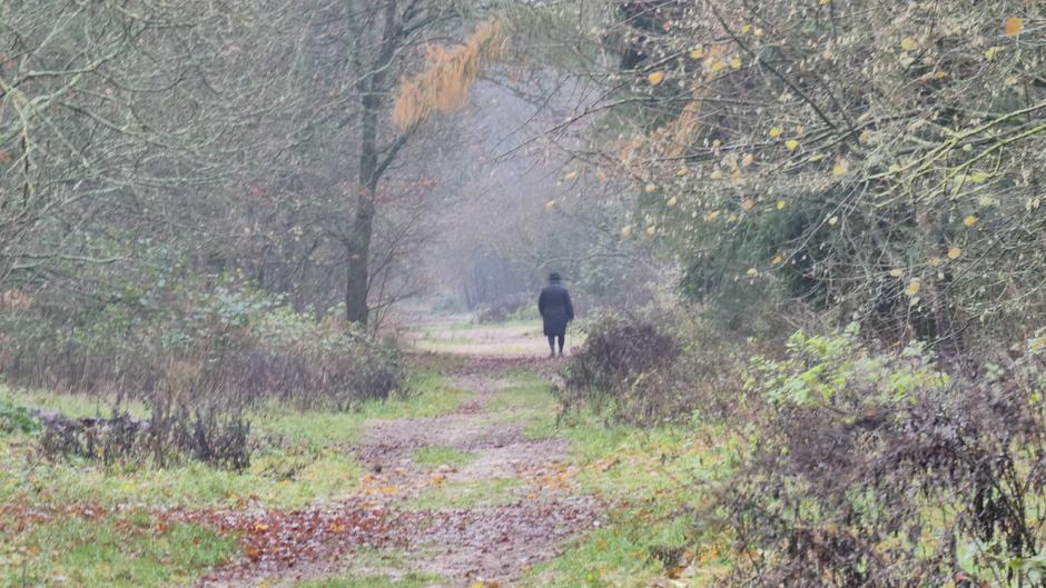 Nevelig en nat in het bos