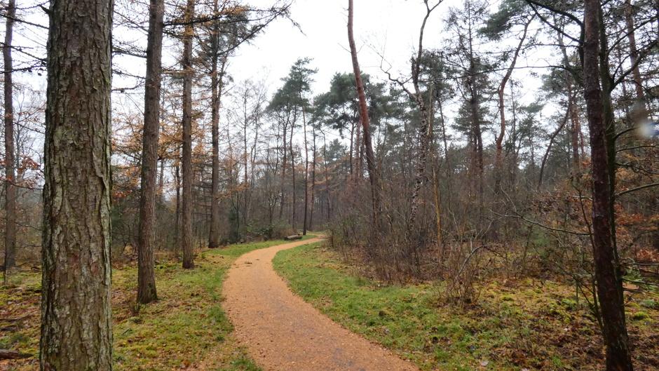 Grijs en nat weer in de Veluwse bossen