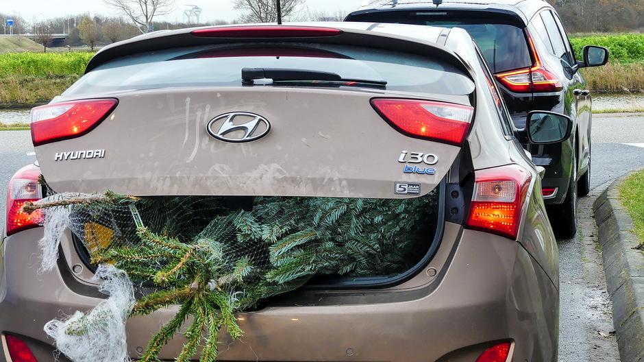 File bij kerstbomen verkoop