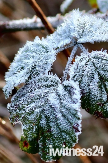 Frost  Project 52