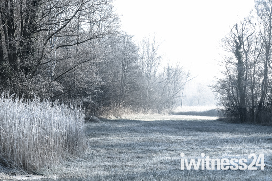 Project 52 - Frost