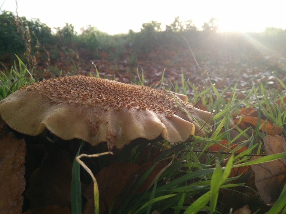 Zonnestralen en paddenstoel.
