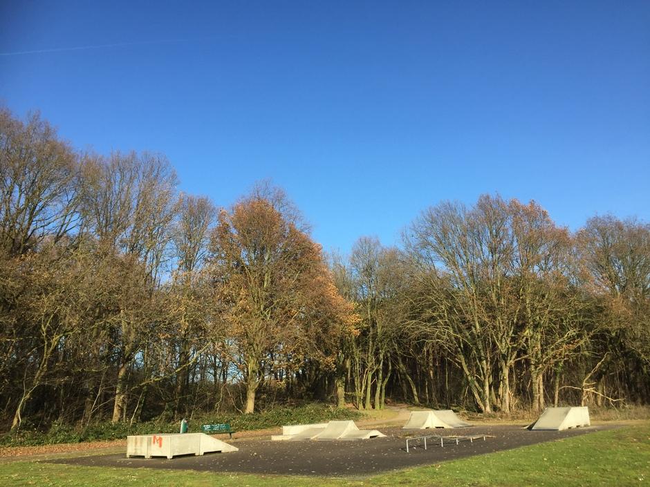 Vandaag zien we door de bomen de blauwe lucht