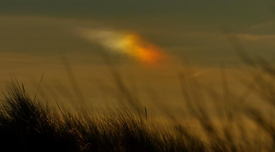 Bijzon in de duinen van Meijendel Wassenaar vanmorgen