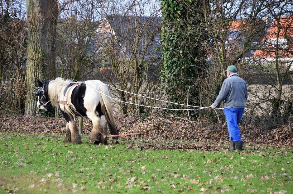 Paard aan het oefenen