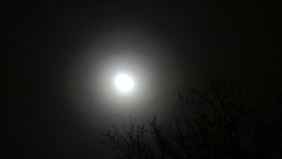 84% maan met Corona en aureool