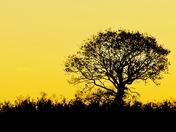 Sunrise in Filby