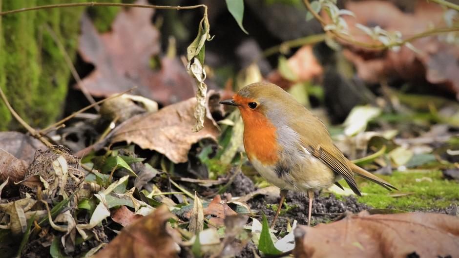 De vogeltjes lijken nog genoeg eten te vinden deze tijd van het jaar