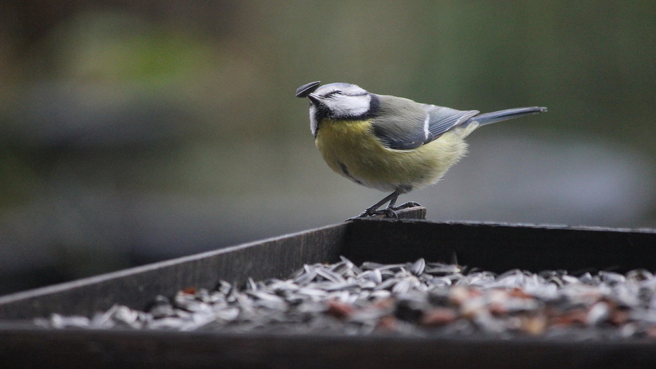 Guur weer vandaag, vogelvoer niet aan te slepen
