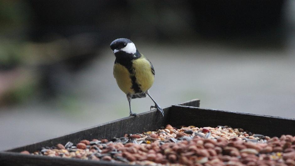 Grijs en nat weer....maar genoeg voer voor de vogels