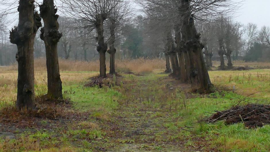 Vies nat koud en grijs weer vandaag, Wassenaar de Horsten
