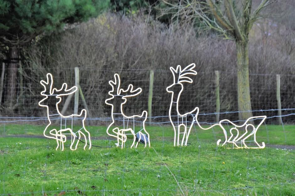 Kerst-rendieren in het groen