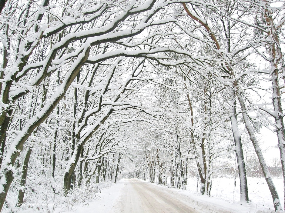Witte Kerst 2010