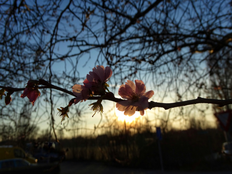 Het lijkt wel voorjaar!