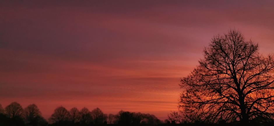 Kleurrijk, koud, ijs en condens vanmorgen en vanmiddag  in Doornenburg