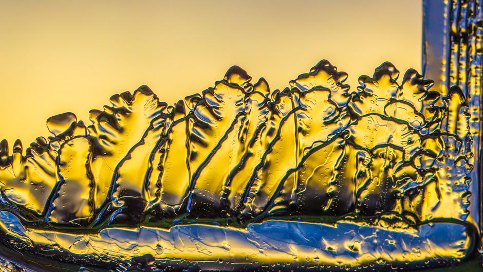 IJsblaadjes uit een bakje water voor de zon