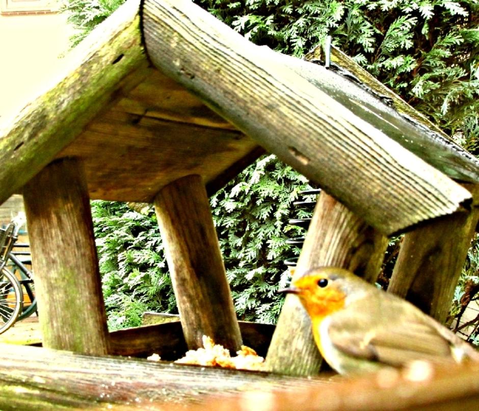 Roodborstje bij het vogelhuisje