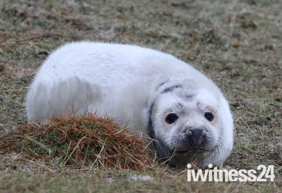 Young Seals