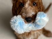 Rosie showing us her toy