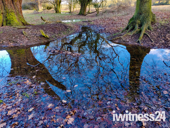 Beautiful reflections in puddles