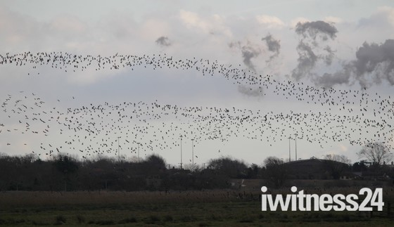 Mixed Murmuration over Cantley