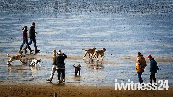 Canine Social