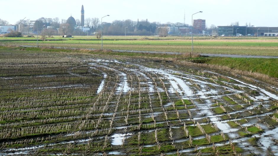 het heeft veel geregend, het grondwater is onderhand weer op peil