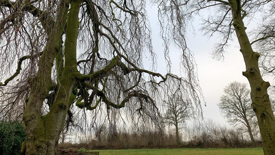 Statige kale boom voor de grijze lucht.