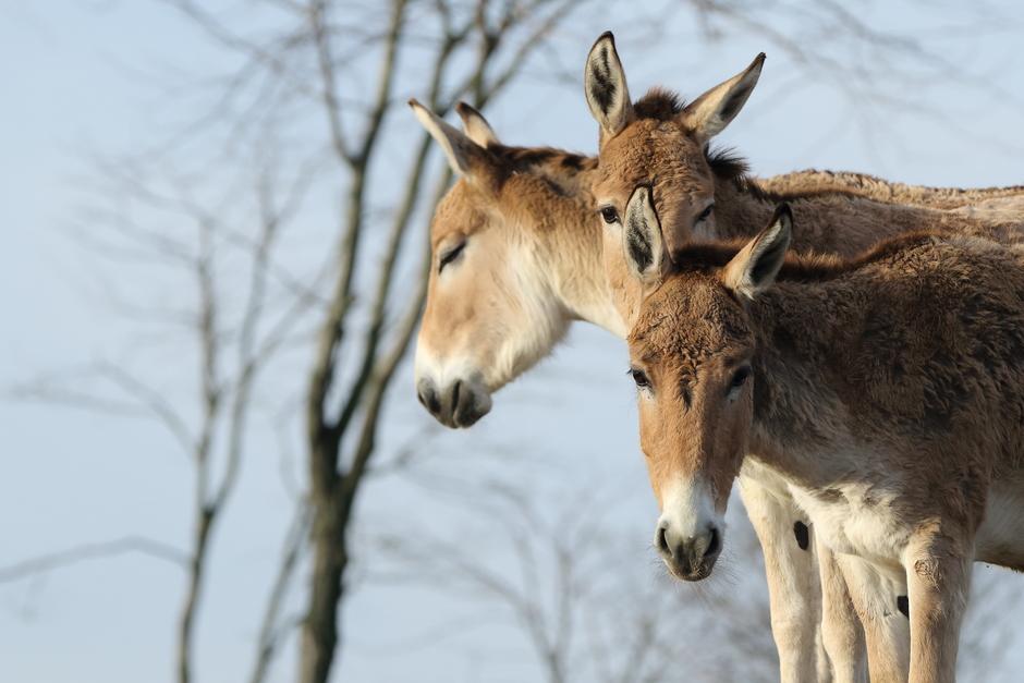 ezels bij elkaar