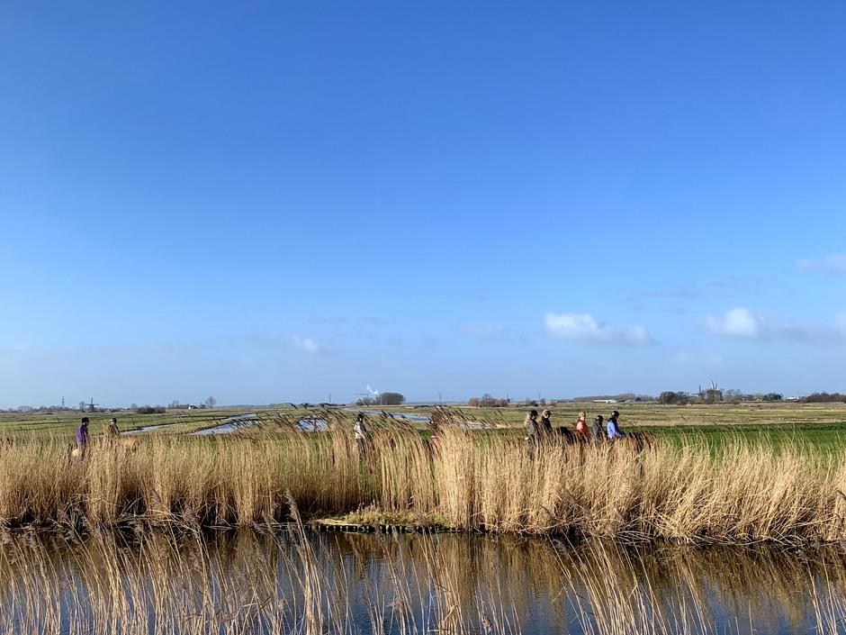 Achter het riet paarden en ruiters in de polder