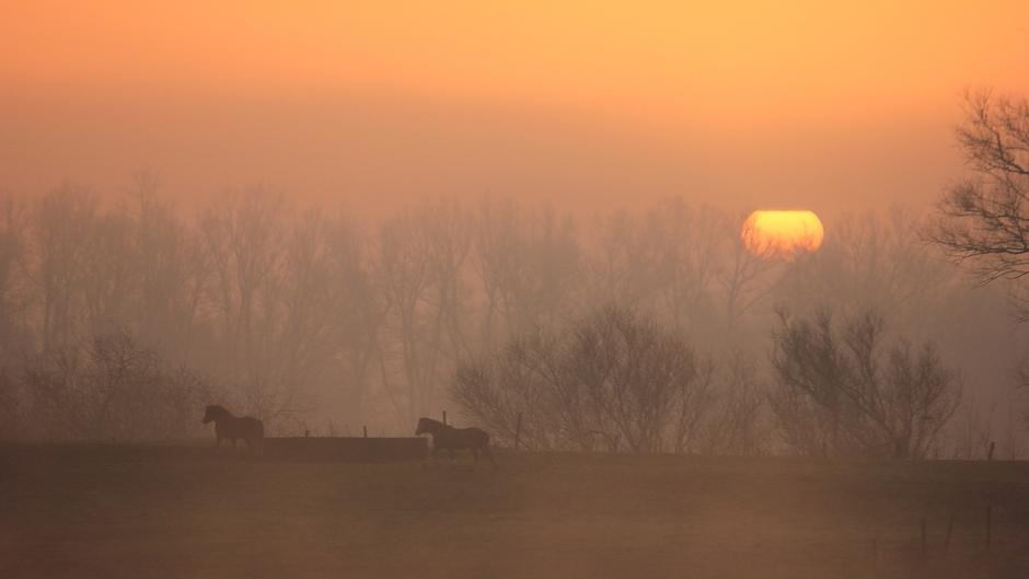 Heiig vanmorgen en een mooie zonsopkomst bij de Lek in Wijk bij Duurstede