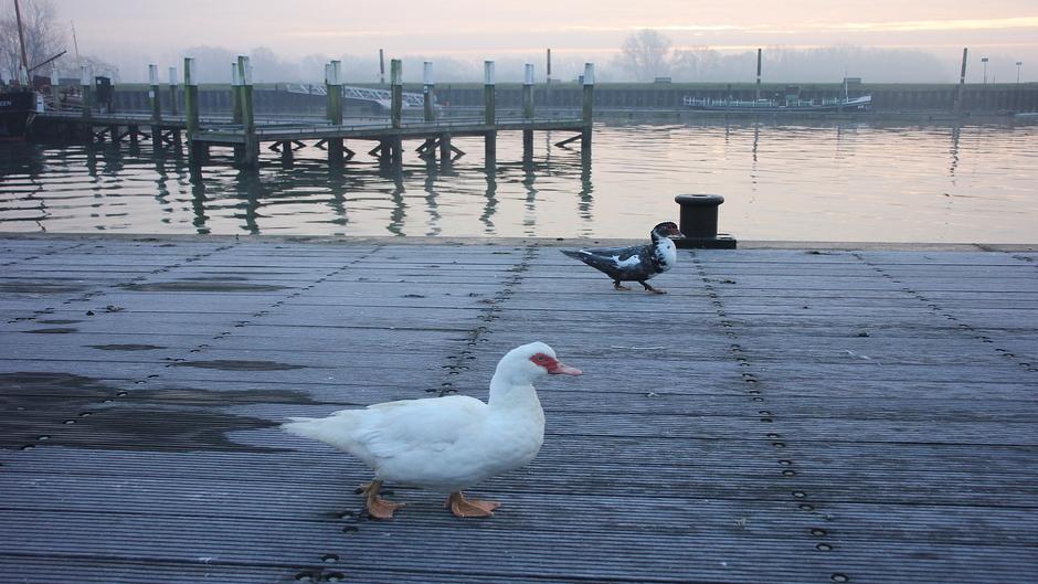 Erg gladde steigers in de haven vanmorgen