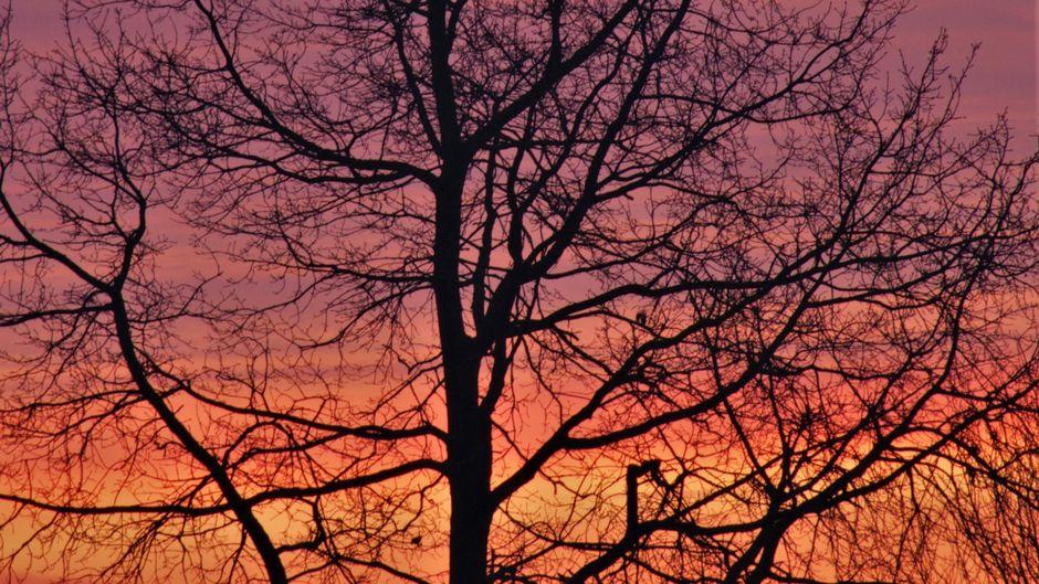 Het ochtendrood vanmorgen in de Betuwe.