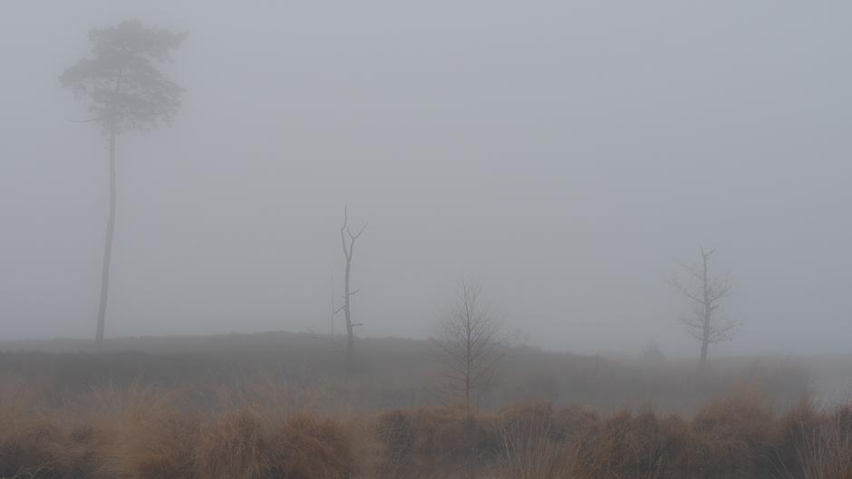 Na Blue monday is het vandaag grey Tuesday