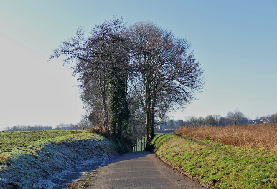 Zonnige winterdag in Limburg