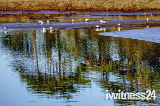 Reflection at Budleigh Salterton
