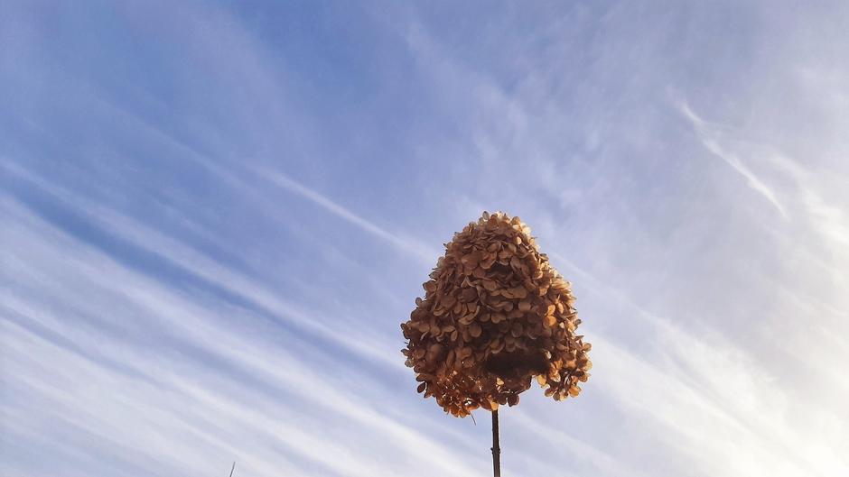 Éindelijk! Blauwe lucht en zon na oneindig veel grauwe dagen!