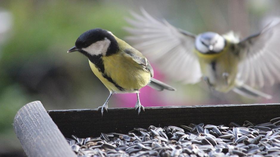 Vogelvoer niet aan te slepen | mezen vliegen af en aan