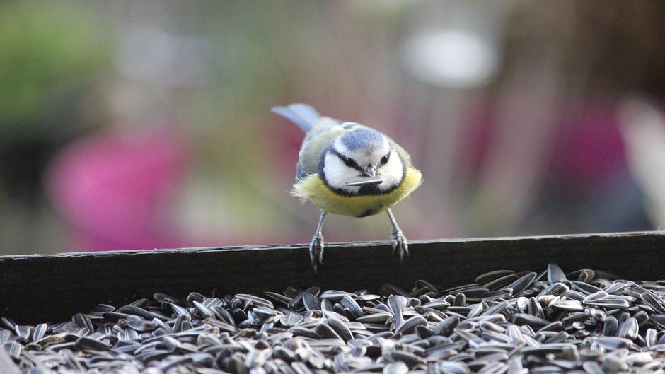 Vogelvoer niet aan te slepen, mezen vliegen af en aan