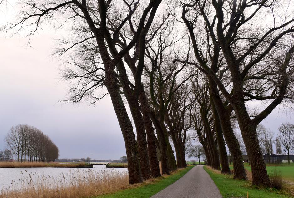 Bomenrij in de winter