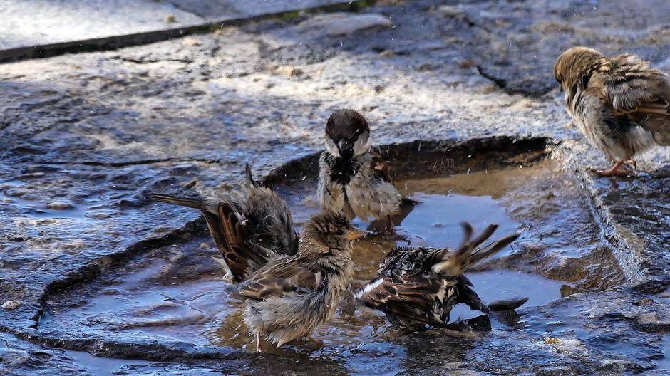 Verkoeling in waterplas