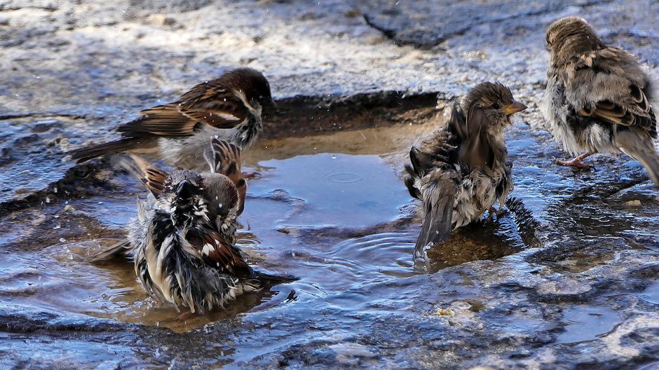 Zomerswarm verkoeling in waterplas